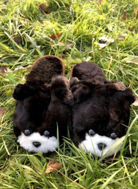 Тапочки-собачки из овечьего меха детские